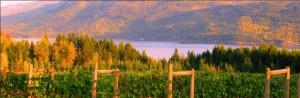 Celista-Estate-Winery